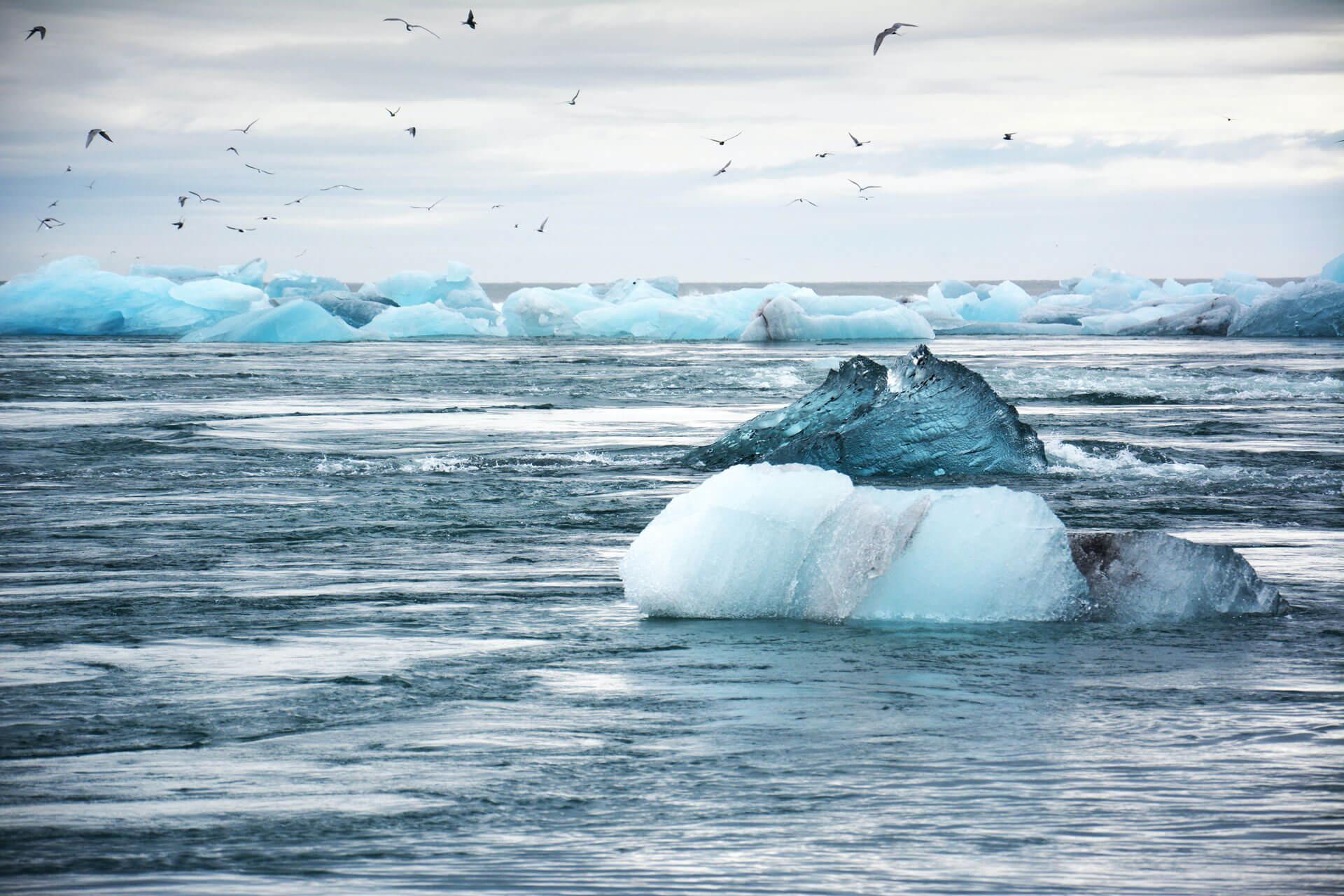 nature-iceberg-bird